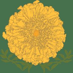 marigold_flower-web